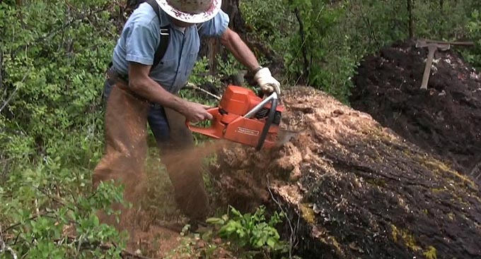 Loggers use chisel bit chainsaws to cut trees